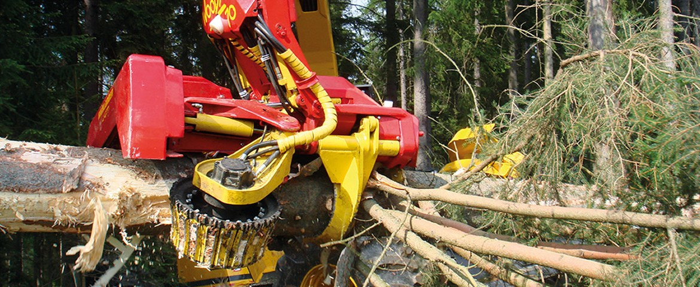dla leśnictwa i przemysłu drzewnego